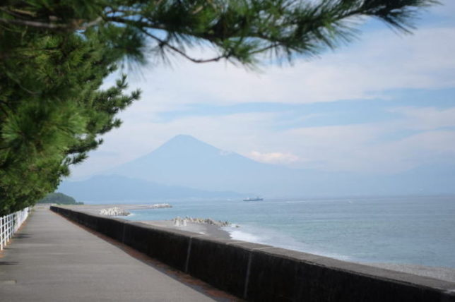 Mt. Fuji as seen from the Pine Grove in Miho (Summaron 35mmF3.5)