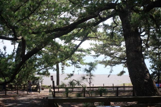 """""""Hagoromo Pine Tree"""" at the Moho beach (Summaron 35mmF3.5)"""