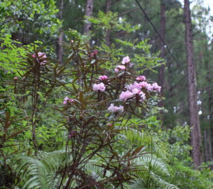flowers in the forest of Chiiwa-kyo